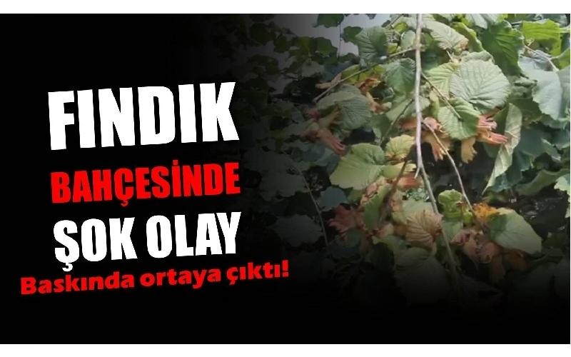BU KADARI PES DEDİRTTİ